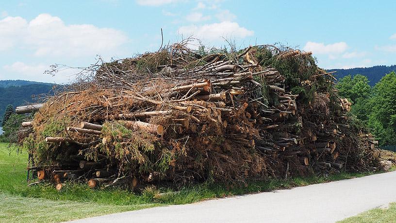 Baumpflegemaßnahmen im Frühjahr